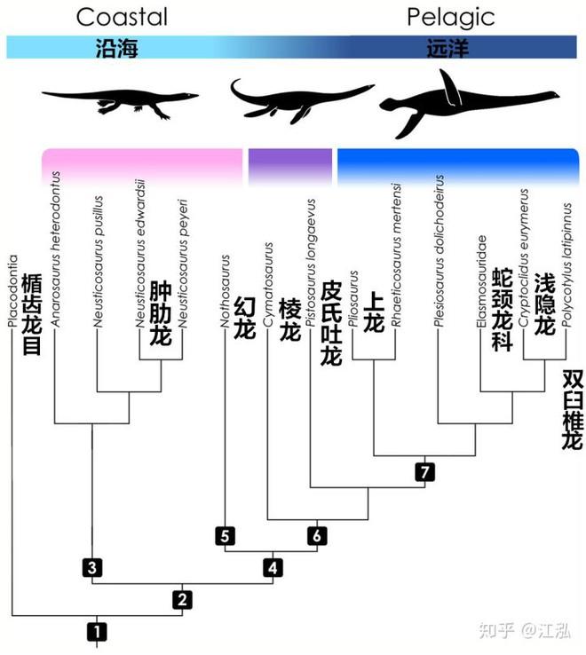 Các nghiên cứu phát hiện ra rằng những con thằn lằn cổ rắn thời tiền sử có khả năng lặn tương tự với cá nhà táng hiện đại - Ảnh 6.