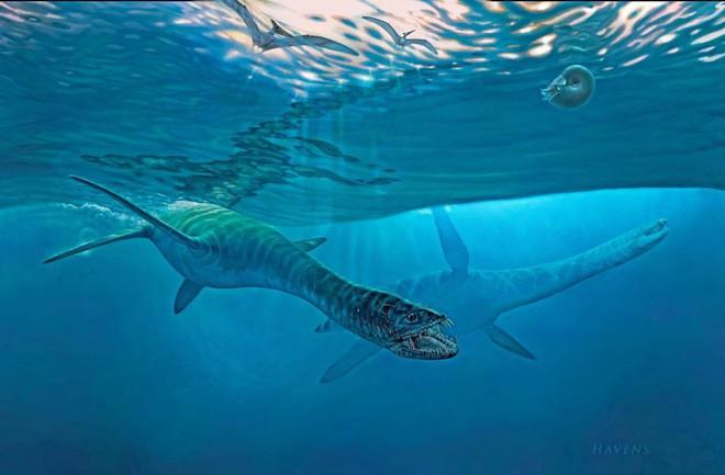 """Plesiosaur từng thống trị đại dương trong hơn một trăm triệu năm trước khi biến mất cùng thời điểm khủng long tuyệt chủng. Dù sinh sống phổ biến các đại dương thời tiền sử, sự hiện diện của loài vật này gắn với nhiều câu hỏi về đặc điểm sinh học, giải phẫu học và tiến hóa mà các nhà nghiên cứu chưa thể giải đáp. Plesiosaur là loài động vật rất kỳ lạ, theo tiến sĩ Ketchum, người trông coi các mẫu vật địa chất tại bảo tàng. """"Chúng có họ hàng với các loài bò sát khác như khủng long, cá sấu, thằn lằn cá và rùa, nhưng chúng tôi không biết chắc nên phân loại chúng như thế nào"""", tiến sĩ Ketchum nói."""