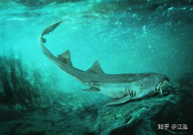 Vô tình phát hiện ra loài cá mập mới trong khi phân loại hóa thạch Tyrannosaurus rex - Ảnh 9.