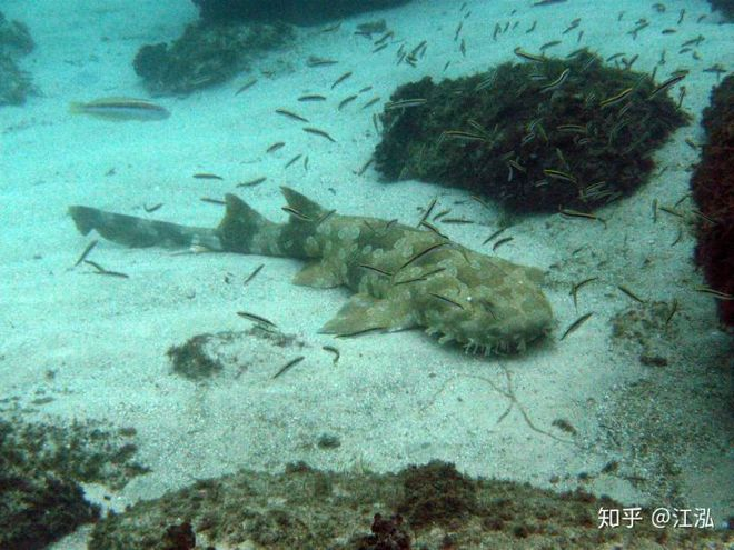 Vô tình phát hiện ra loài cá mập mới trong khi phân loại hóa thạch Tyrannosaurus rex - Ảnh 10.