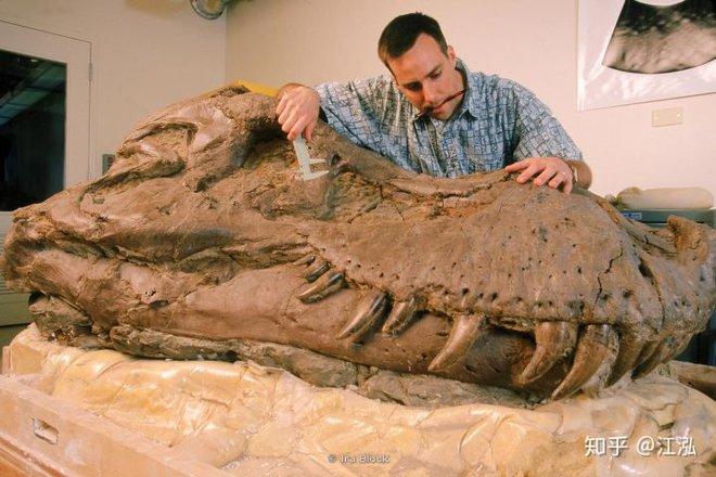 Vô tình phát hiện ra loài cá mập mới trong khi phân loại hóa thạch Tyrannosaurus rex - Ảnh 4.
