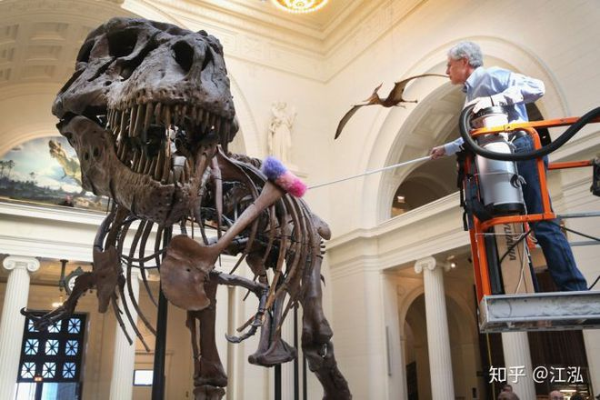 Vô tình phát hiện ra loài cá mập mới trong khi phân loại hóa thạch Tyrannosaurus rex - Ảnh 2.