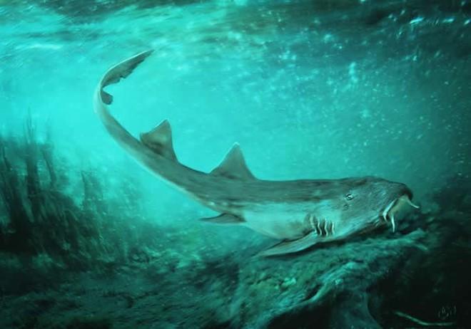 Vô tình phát hiện ra loài cá mập mới trong khi phân loại hóa thạch Tyrannosaurus rex - Ảnh 1.