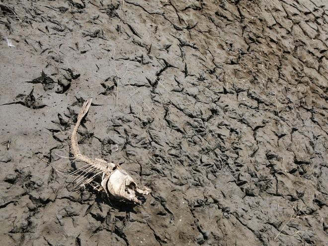 Cảnh báo đỏ: Đại tuyệt chủng lần 6 đang diễn ra nhanh hơn nhiều so với mọi dự báo, lỗi hoàn toàn do con người - Ảnh 2.
