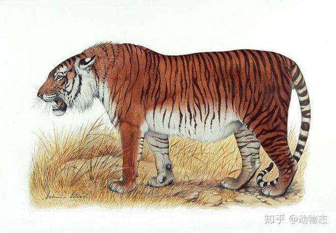 Tại sao không có hổ trên thảo nguyên Mông Cổ? - Ảnh 2.