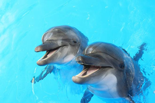 Những ví dụ cho thấy tiến hóa đôi khi cũng hà tiện, tận dụng cùng một đặc điểm cho hai loài khác nhau - Ảnh 2.