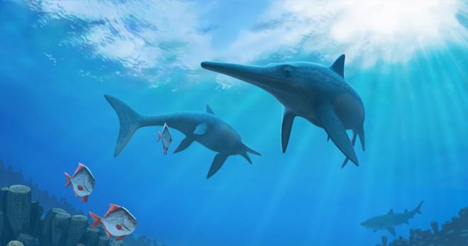 Những ví dụ cho thấy tiến hóa đôi khi cũng hà tiện, tận dụng cùng một đặc điểm cho hai loài khác nhau - Ảnh 1.