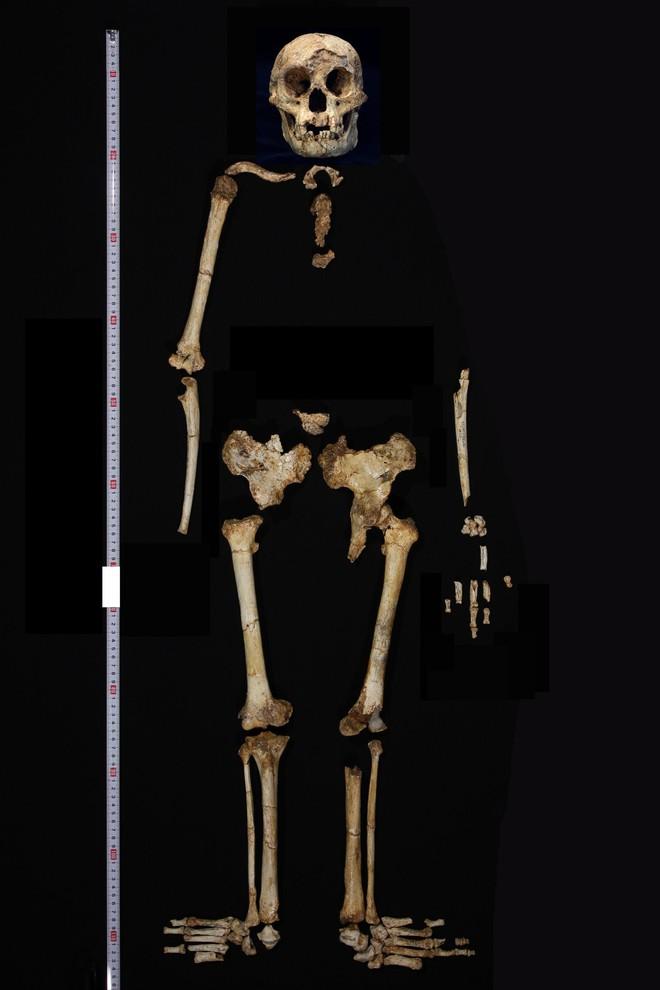 Những ví dụ cho thấy tiến hóa đôi khi cũng hà tiện, tận dụng cùng một đặc điểm cho hai loài khác nhau - Ảnh 11.