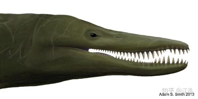 Predator X: Quái vật biển cả đáng sợ nhất kỷ Jura - Ảnh 12.