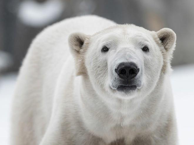 Những kỷ lục kỳ lạ và độc đáo nhất thế giới từng được xác lập bởi các loài động vật - Ảnh 17.