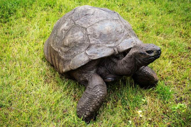 Những kỷ lục kỳ lạ và độc đáo nhất thế giới từng được xác lập bởi các loài động vật - Ảnh 2.