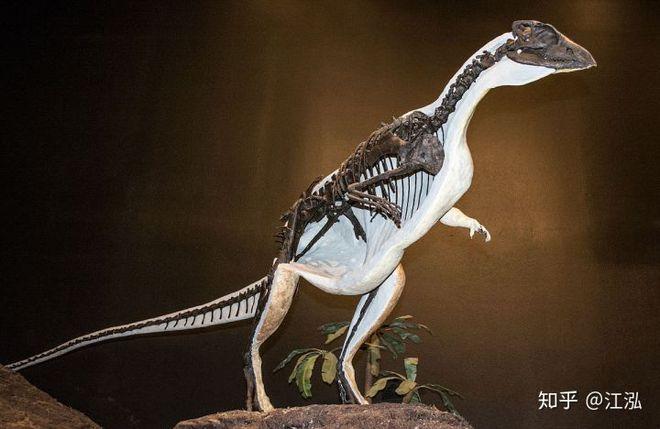 Phát hiện loài khủng long sống dưới lòng đất 100 triệu năm trước - Ảnh 11.