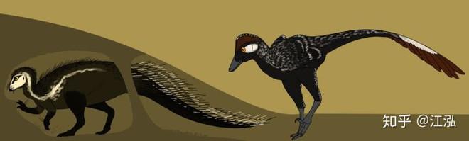 Phát hiện loài khủng long sống dưới lòng đất 100 triệu năm trước - Ảnh 7.