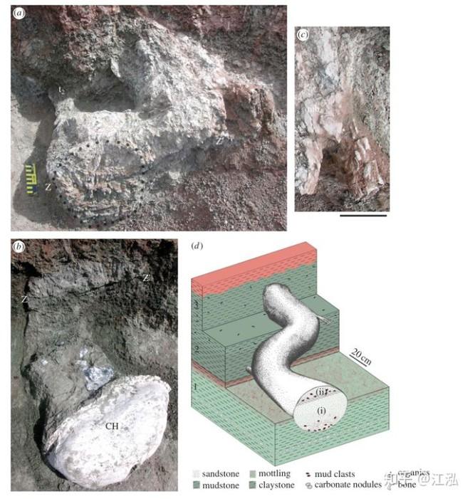 Phát hiện loài khủng long sống dưới lòng đất 100 triệu năm trước - Ảnh 2.