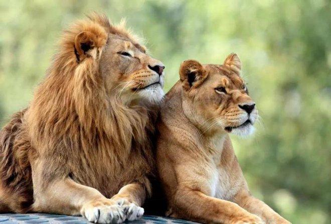 Để giữ lại vẻ đẹp, nhiều loài động vật dường như đang đi vào ngõ cụt của sự tiến hóa? - Ảnh 7.