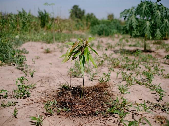 Ecosia - công cụ tìm kiếm phủ xanh Trái Đất vừa trồng thành công cây thứ 100 triệu - Ảnh 1.