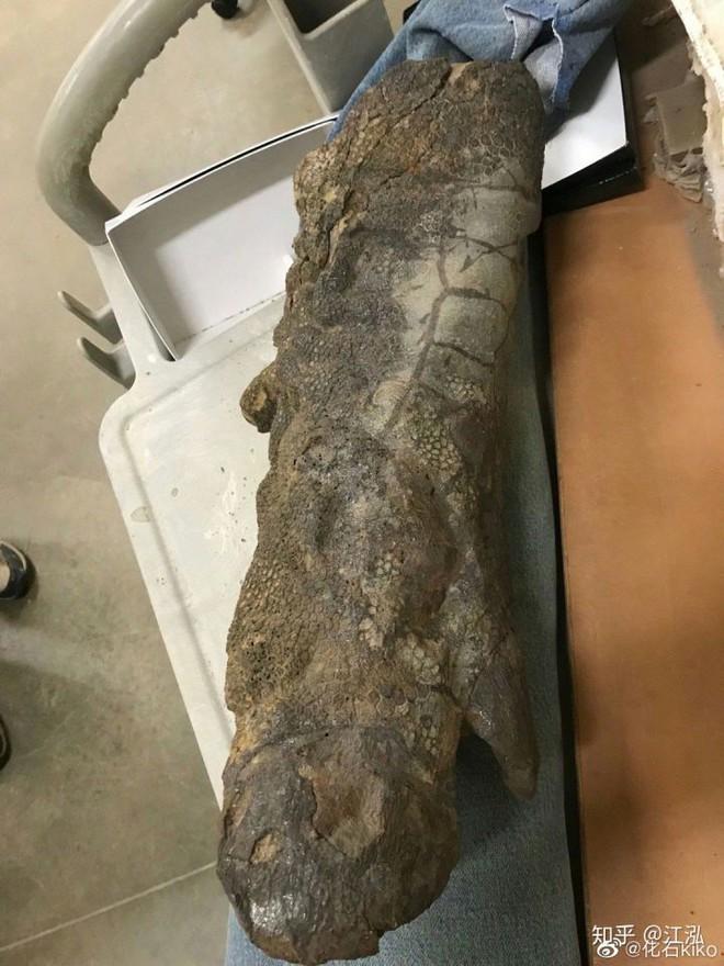 Phát hiện ra xác ướp khủng long có dấu chân hình móng ngựa tại Hoa Kỳ - Ảnh 9.
