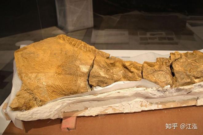 Phát hiện ra xác ướp khủng long có dấu chân hình móng ngựa tại Hoa Kỳ - Ảnh 2.