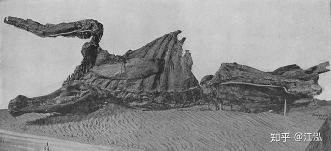 Phát hiện ra xác ướp khủng long có dấu chân hình móng ngựa tại Hoa Kỳ - Ảnh 1.