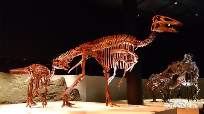 Phát hiện ra xác ướp khủng long có dấu chân hình móng ngựa tại Hoa Kỳ - Ảnh 8.