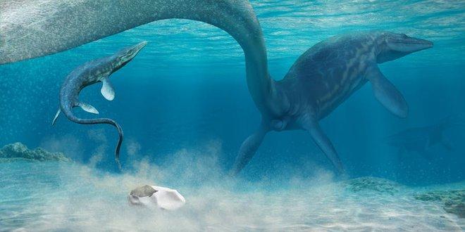 Phát hiện trứng hóa thạch lớn nhất trong thời đại khủng long, nó có thể đến từ một loài bò sát cổ đại chuyên ăn thịt cá mập - Ảnh 1.