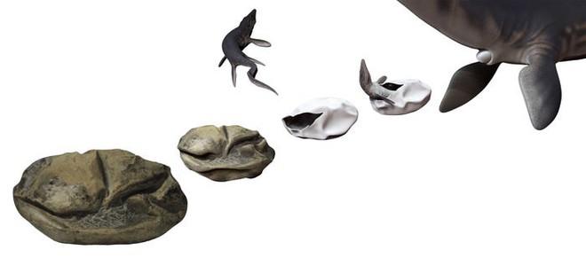 Phát hiện trứng hóa thạch lớn nhất trong thời đại khủng long, nó có thể đến từ một loài bò sát cổ đại chuyên ăn thịt cá mập - Ảnh 4.