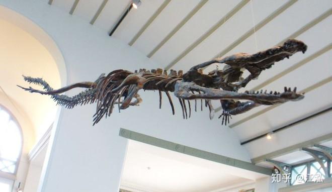 Machimosaurus rex: Loài cá sấu nước mặn to lớn nhất từng được con người phát hiện - Ảnh 12.
