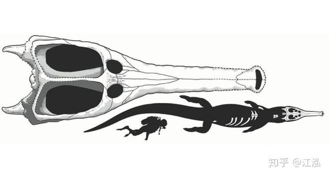 Machimosaurus rex: Loài cá sấu nước mặn to lớn nhất từng được con người phát hiện - Ảnh 7.