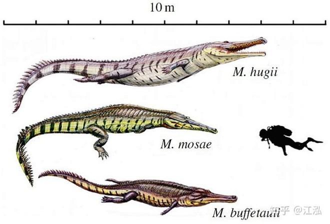 Machimosaurus rex: Loài cá sấu nước mặn to lớn nhất từng được con người phát hiện - Ảnh 13.