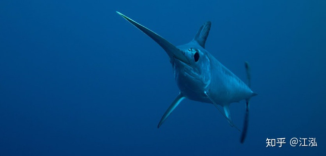 Phát hiện loài cá kiếm cổ đại với hàm răng sắc nhọn ngoại cỡ - Ảnh 7.