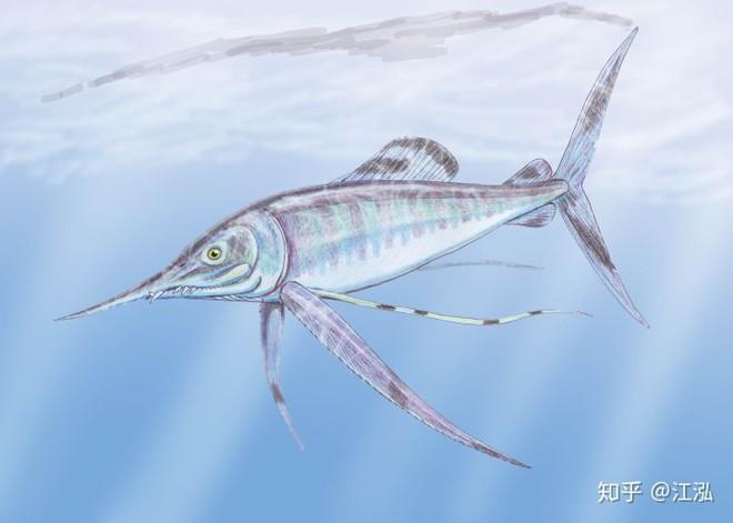 Phát hiện loài cá kiếm cổ đại với hàm răng sắc nhọn ngoại cỡ - Ảnh 6.