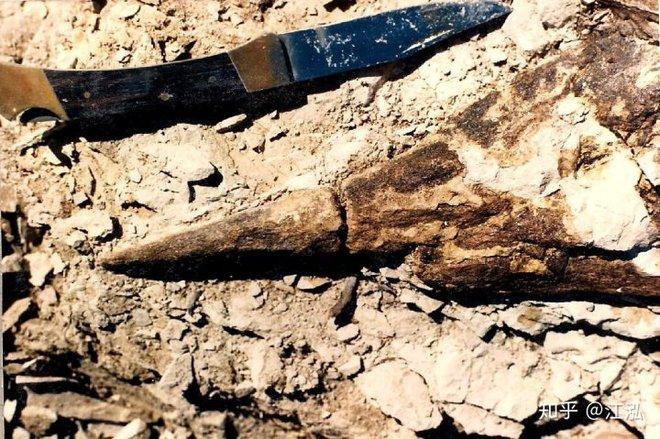 Phát hiện loài cá kiếm cổ đại với hàm răng sắc nhọn ngoại cỡ - Ảnh 5.