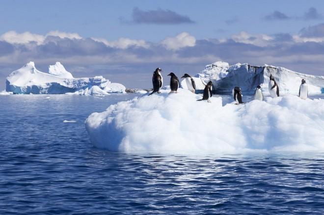 Nghiên cứu: Nam Cực đang nóng lên nhanh hơn gấp 3 lần so với phần còn lại của thế giới - Ảnh 2.