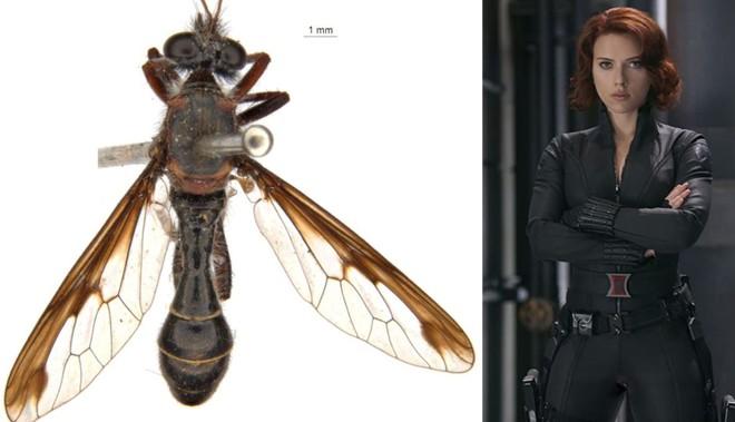 Úc: Giới khoa học đặt tên các loài côn trùng mới theo Stan Lee và nhiều siêu anh hùng của Marvel - Ảnh 3.