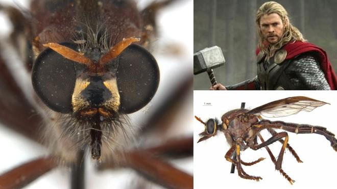 Úc: Giới khoa học đặt tên các loài côn trùng mới theo Stan Lee và nhiều siêu anh hùng của Marvel - Ảnh 5.