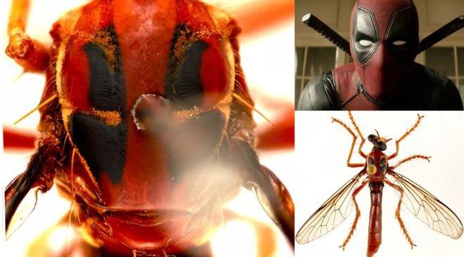 Úc: Giới khoa học đặt tên các loài côn trùng mới theo Stan Lee và nhiều siêu anh hùng của Marvel - Ảnh 1.