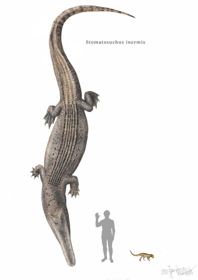 Stomatosuchus inermis: Loài cá sấu cổ đại có thể nuốt chửng cả thế giới - Ảnh 6.