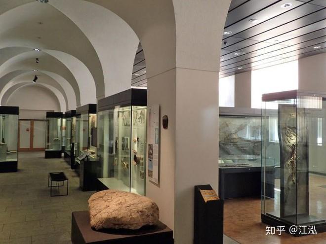 Hóa thạch của quái vật biển kỷ Jura được tìm thấy trên núi của Thụy Sĩ - Ảnh 8.