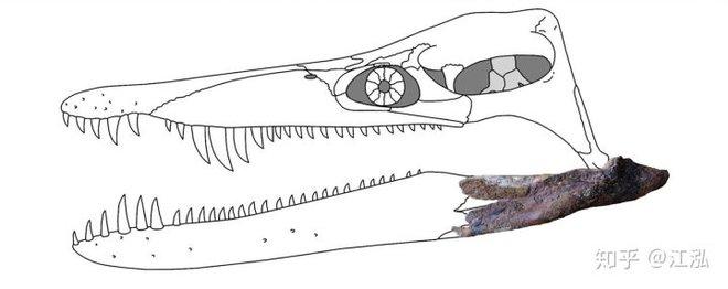 Hóa thạch của quái vật biển kỷ Jura được tìm thấy trên núi của Thụy Sĩ - Ảnh 9.