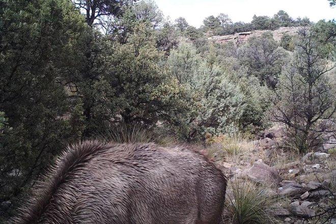 Đố bạn nhìn thấy con sư tử núi trong bức ảnh động vật hoang dã đáng sợ này - Ảnh 1.