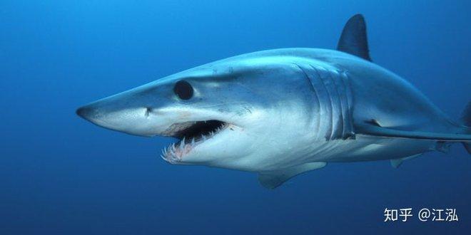 Cretoxyrhina: Loài cá mập thời tiền sử còn đáng sợ hơn cả Megalodon - Ảnh 4.