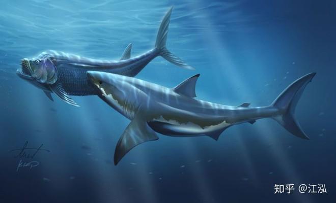 Cretoxyrhina: Loài cá mập thời tiền sử còn đáng sợ hơn cả Megalodon - Ảnh 12.