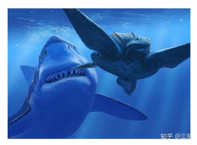 Cretoxyrhina: Loài cá mập thời tiền sử còn đáng sợ hơn cả Megalodon - Ảnh 7.