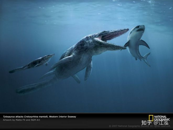 Cretoxyrhina: Loài cá mập thời tiền sử còn đáng sợ hơn cả Megalodon - Ảnh 11.