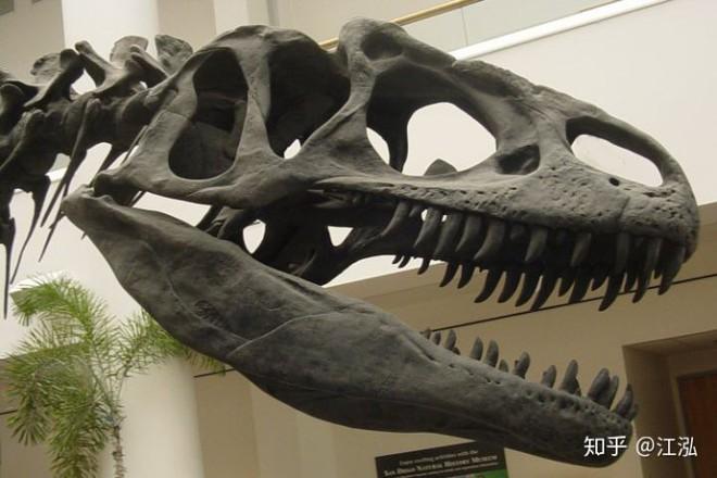 Những mẫu hóa thạch mới tiết lộ loài khủng long Allosaurus không chỉ khát máu mà chúng còn ăn thịt cả đồng loại - Ảnh 7.