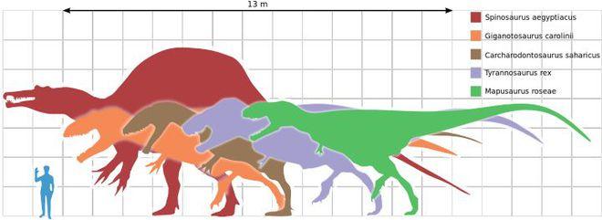 Tại sao loài khủng long đã thống trị Trái Đất hơn 100 triệu năm lại không sinh ra trí tuệ như loài người? - Ảnh 3.
