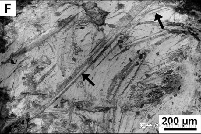 Tìm thấy dấu vết của động vật có vú trên hóa thạch của loài khủng long Mamenchisaurus - Ảnh 4.