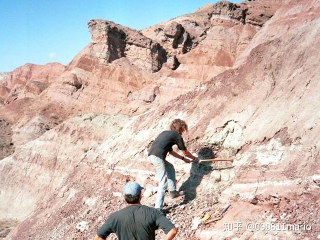 Tìm thấy dấu vết của động vật có vú trên hóa thạch của loài khủng long Mamenchisaurus - Ảnh 1.