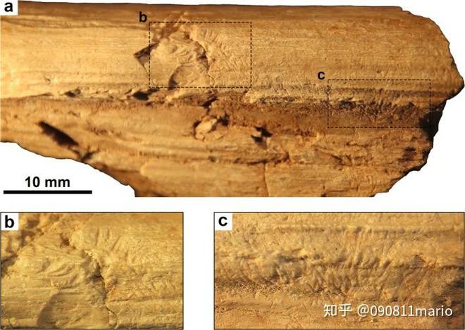 Tìm thấy dấu vết của động vật có vú trên hóa thạch của loài khủng long Mamenchisaurus - Ảnh 3.