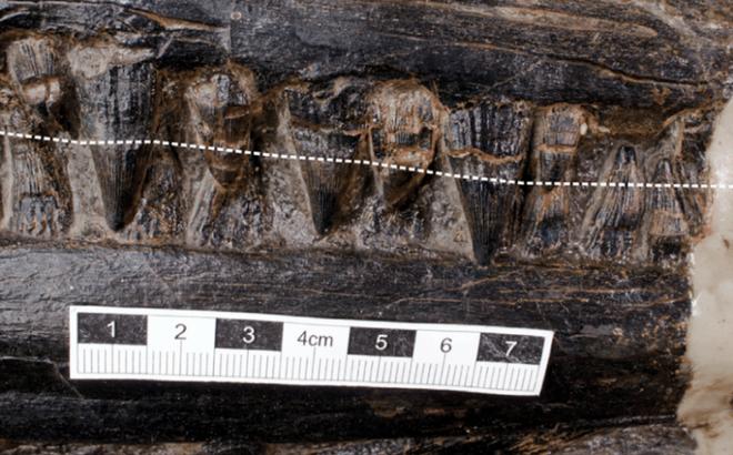 Hóa thạch tiết lộ loài bò sát săn mồi tối thượng trong thời đại khủng long - Ảnh 5.